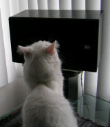 Duke listens to 'Trane